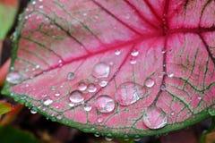 Deszcz krople na kolorowej roślinie Obraz Royalty Free