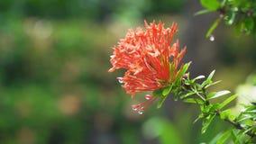 Deszcz krople na kwiacie zbiory