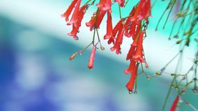 Deszcz krople na kwiacie zbiory wideo