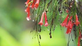 Deszcz krople na kwiacie zdjęcie wideo