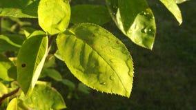 Deszcz krople na liściach Zdjęcie Stock