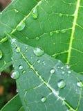 Deszcz krople na liściach Obraz Stock