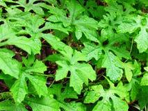 Deszcz krople na liściach Obrazy Stock