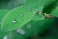 Deszcz krople na liściach Zdjęcia Royalty Free