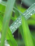 Deszcz krople na liściach Fotografia Stock