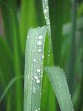 Deszcz krople na liściach Obrazy Royalty Free