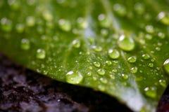 Deszcz krople na liściu Obrazy Royalty Free