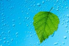 Deszcz krople na okno Zdjęcie Stock