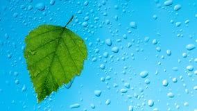 Deszcz krople na okno Zdjęcia Royalty Free