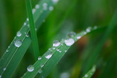 Deszcz krople na trawie Zdjęcie Royalty Free
