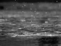 Deszcz krople w chłodnym dniu obraz royalty free