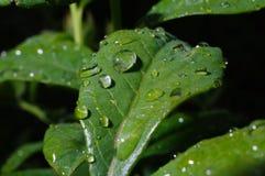 Deszcz krople w Czerwu fotografia stock