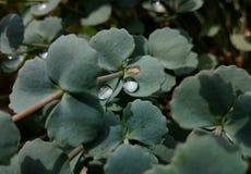 Deszcz krople w ogródzie Obraz Royalty Free