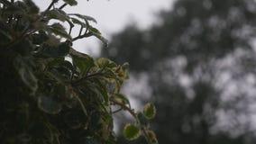 deszcz lasowej zieleni ulistnienie w deszczu Lato deszcz mokre liście mokra trawa chmurzy mokrą pogodę Nalewać deszcz zdjęcie wideo