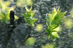 Deszcz na długim ujawnieniu Fotografia Stock