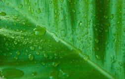 Deszcz na liściu Zdjęcia Stock