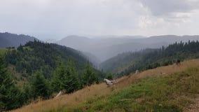 Deszcz nad Halnym lasem obraz stock