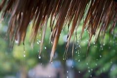Deszcz od trawa dachu miękkie ogniska, obraz royalty free