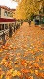 Deszcz opuszcza drzewa w Ioannina miasta Greece zimie Zdjęcie Royalty Free