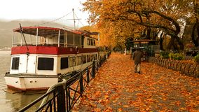 Deszcz opuszcza drzewa w Ioannina miasta Greece zimie Fotografia Stock