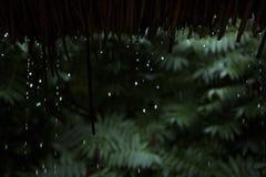 Deszcz opuszcza spada puszek od bambusa dachu Zdjęcie Royalty Free