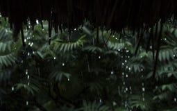 Deszcz opuszcza spada puszek od bambusa dachu Zdjęcia Stock