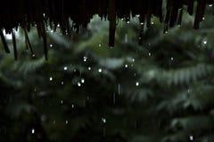 Deszcz opuszcza spada puszek od bambusa dachu Fotografia Royalty Free