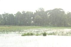 deszcz deszcz przychodził więcej radość zdjęcia stock