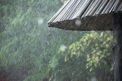 Deszcz spada w parku zdjęcia royalty free