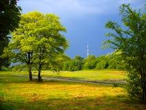 deszcz sunset drzewo Obrazy Royalty Free