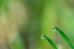Deszcz trawa i krople Obraz Stock