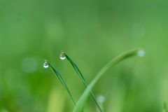 Deszcz trawa i krople Fotografia Royalty Free
