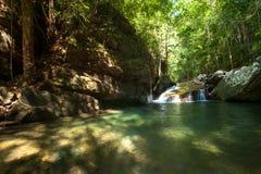 deszcz tropikalnych lasów, Fotografia Stock