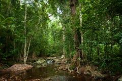 deszcz tropikalnych lasów, Zdjęcie Royalty Free