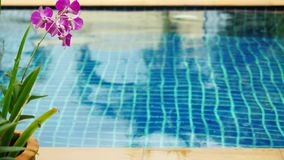 Deszcz w basenie przeciw przedpolu kwiatu frangipani rozmieniona ostrość od zamazanego 3840x2160 zbiory wideo