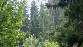 Deszcz w lesie zdjęcie wideo
