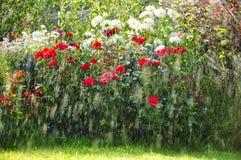 Deszcz w ogródzie Obraz Stock