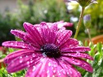 Deszcz w ogródzie Obraz Royalty Free