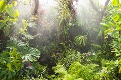 Deszcz w tropikalnym tropikalnym lesie deszczowym fotografia stock