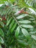 Deszcz zakrywać dzikie paprocie obrazy stock