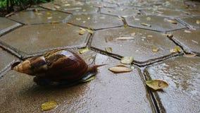 Deszczowy dzień z ślimaczkiem zdjęcia royalty free