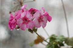Deszczowy dzień na okno obraz royalty free