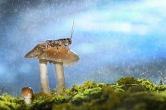 Deszczowy dzień w drewnach obraz royalty free