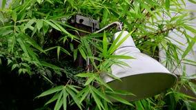 Deszczowy dzień w ogródzie, deszcz spadał na liście, bambusie, ulewny deszcz, lampowy cień, raindrops i grzmotu dźwięk i, zbiory wideo