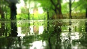 Deszczowy Dzień w parku z Raindrops na kałużach zdjęcie wideo