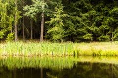 Deszczowy dzień w czeskim lasowym Lasowym jeziorze z wodnymi lelujami Fotografia Royalty Free