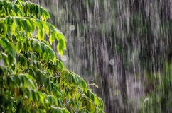 Deszczów liście Obrazy Stock