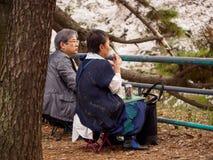 Det äldre paret beskådar Sakura blommor, Nagoya, Japan royaltyfria foton