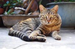 Det är en väldig katt som håller ögonen på mig Det är väldigt, våldsamt och gnistrandet som ett lejon royaltyfri fotografi