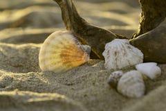 Det är ett strandting Fotografering för Bildbyråer